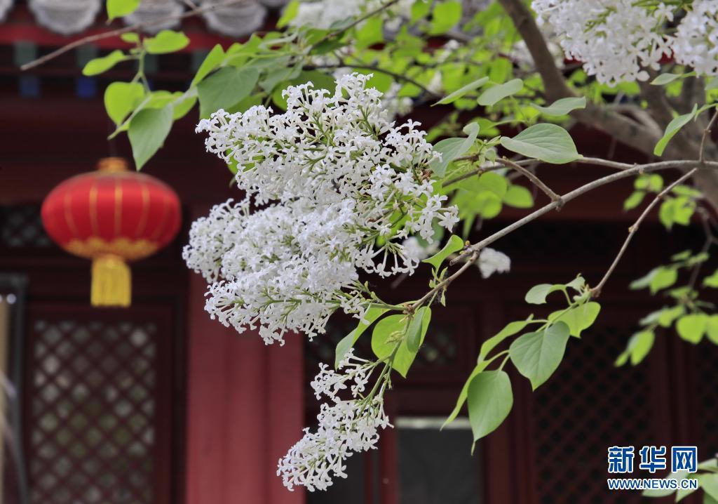 北京:古刹花开