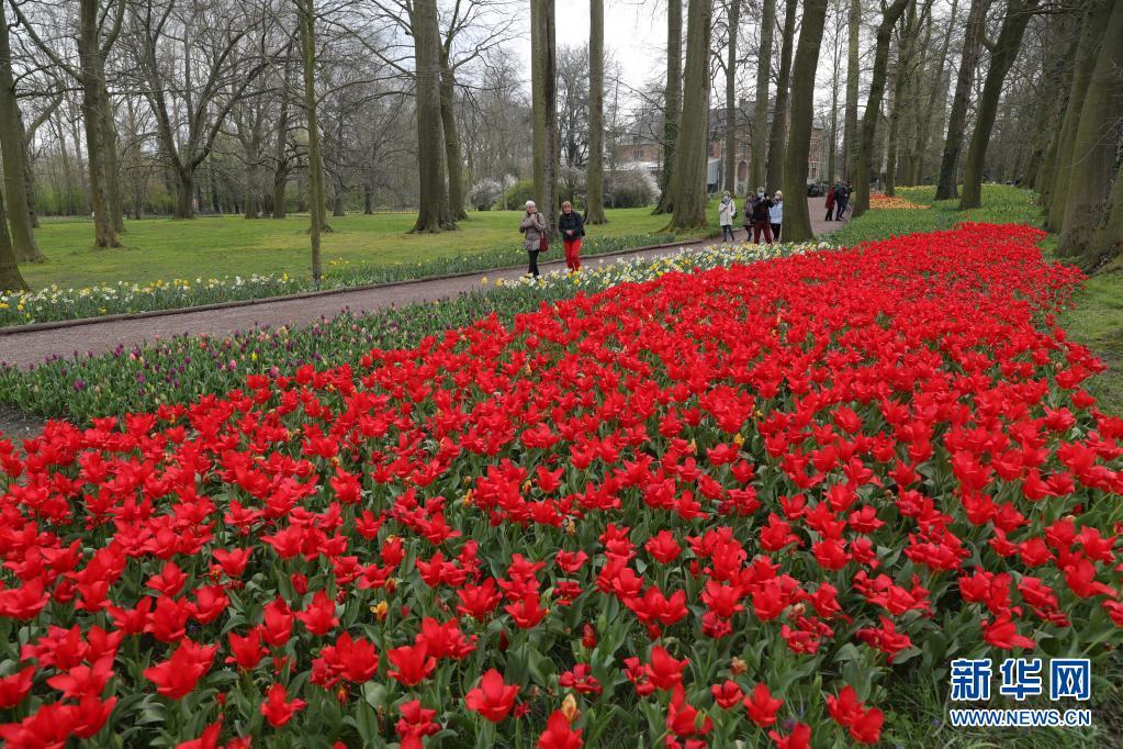 比利时:鲜花百万株