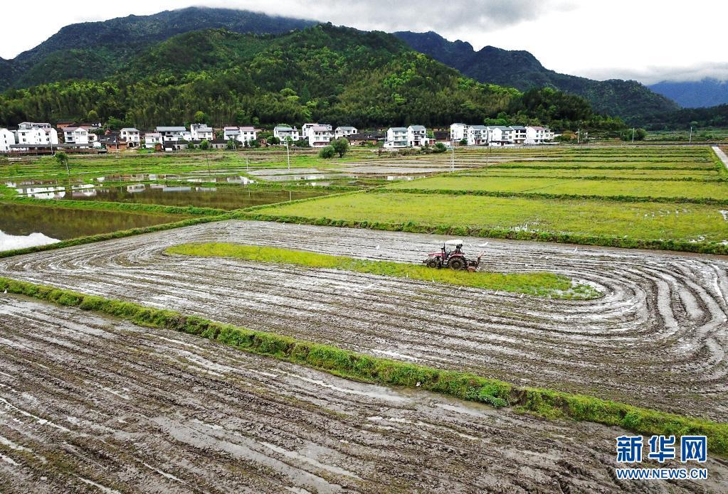 福建武夷山:产业依托 文旅赋能 促进乡村振兴