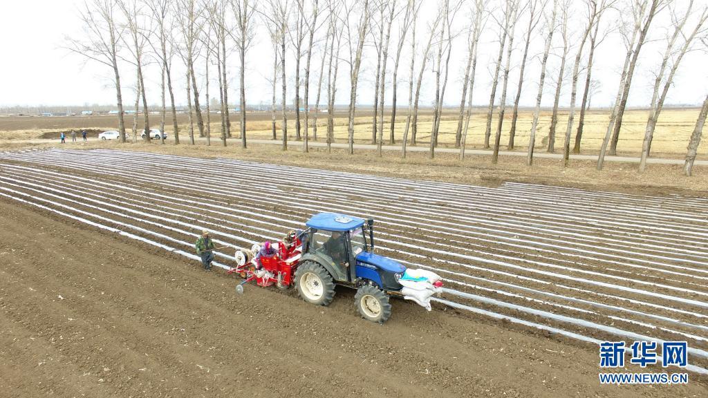 黑龙江宁安:马铃薯科学化种植全面展开