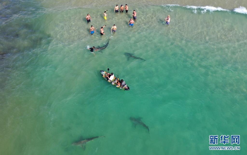 以色列:与鲨共舞