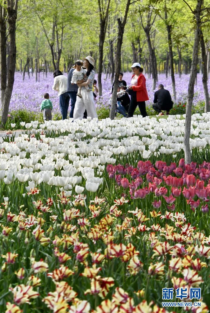 北京:永定河畔休闲赏花