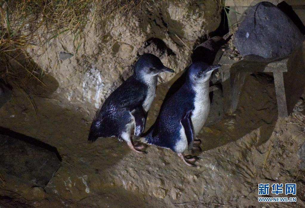 世界企鹅日