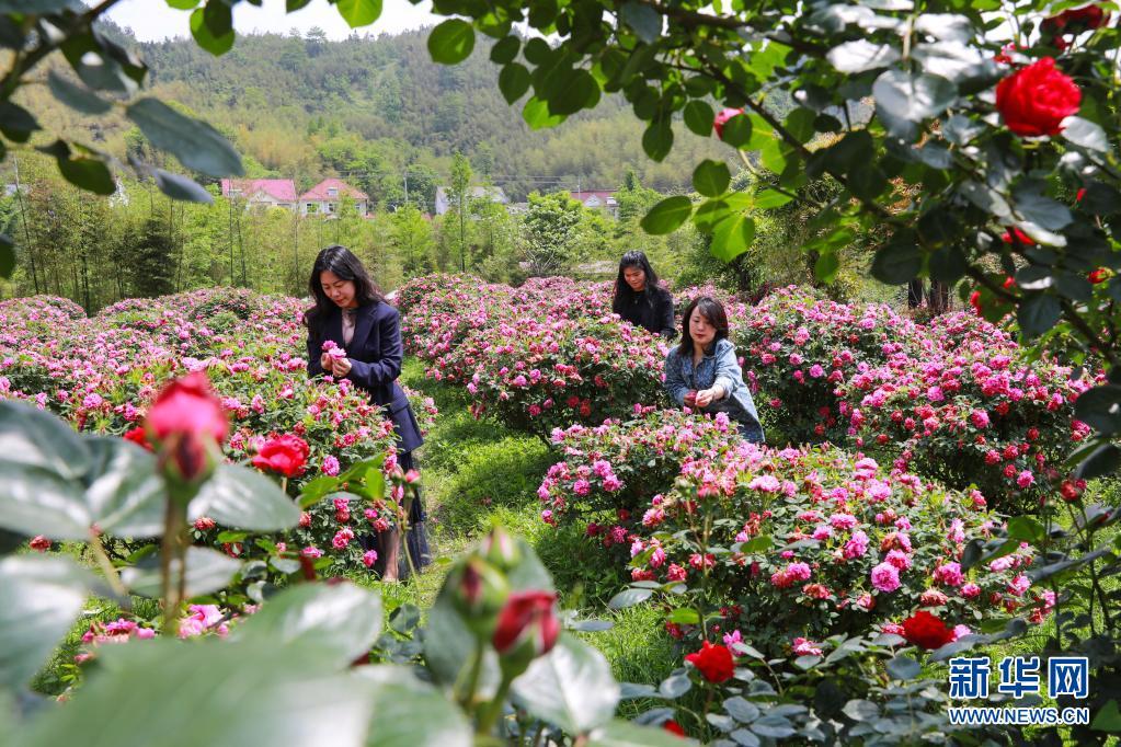 杭州:花开引客来