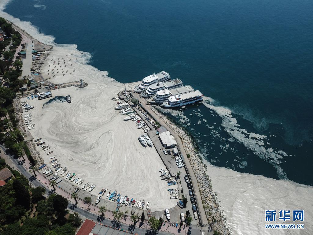 """蔓延!""""海鼻涕""""侵袭土耳其海岸 对海洋生态构成严重威胁"""
