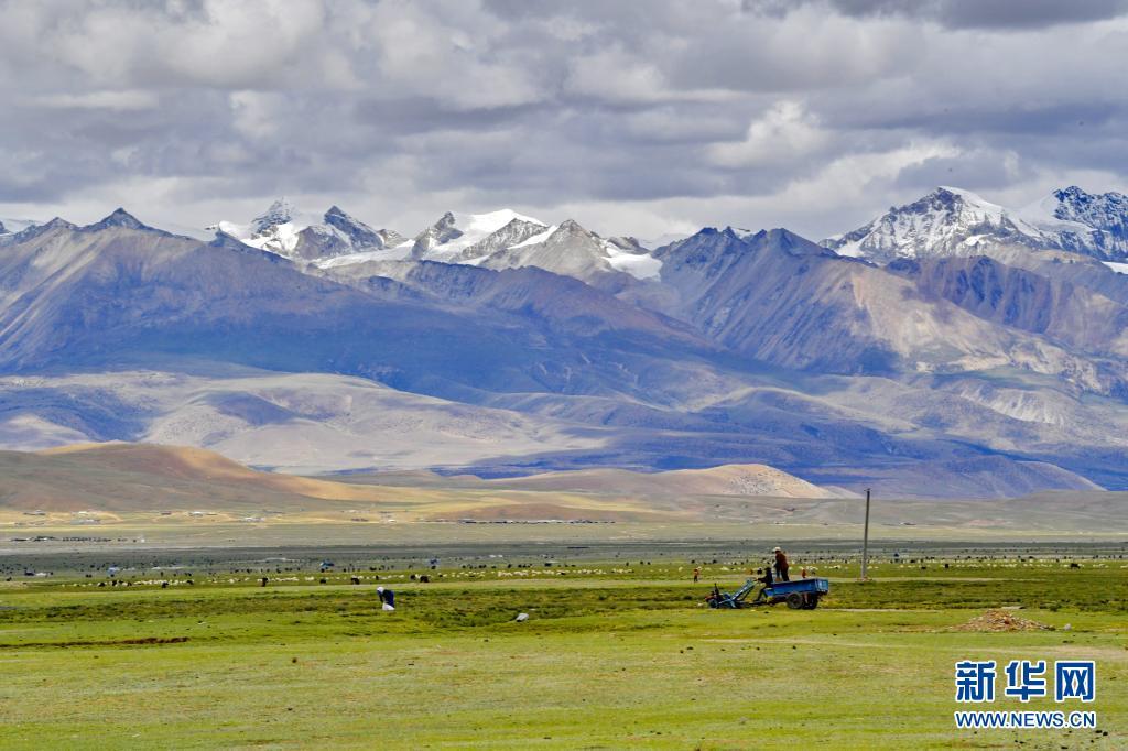 西藏拉萨:夏日草场