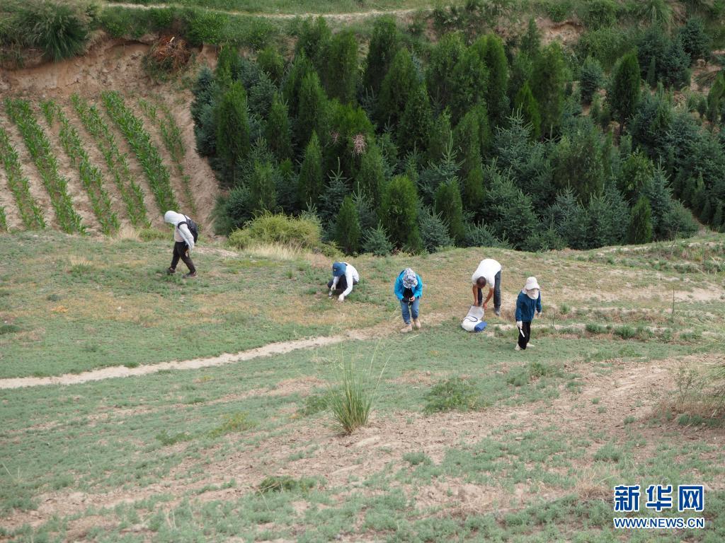 直击:甘青两省湟水流域联合考古调查启动