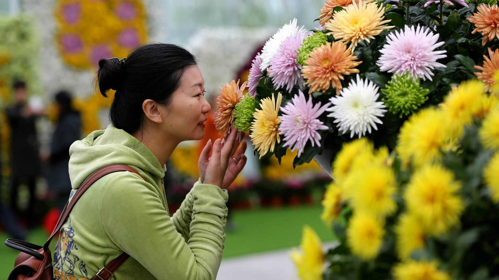 【大美中国】色彩斑斓的秋日童话 - 人在上海    - 中国新闻画报