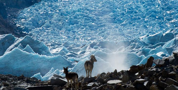 西藏崗布冰川:流澌爭看浴冰川