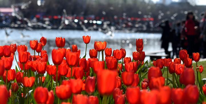 春來花開,綻放正當時