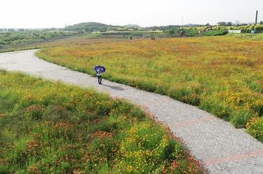 河北石家莊:滹沱河兩岸建成綠色生態景觀長廊