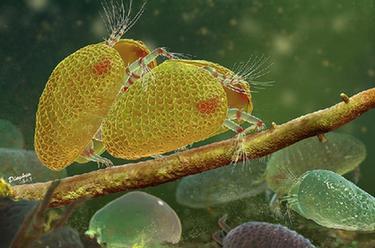 古生物學家發現1億年前的動物精子