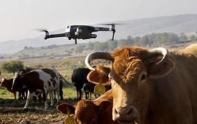 無人機牧牛