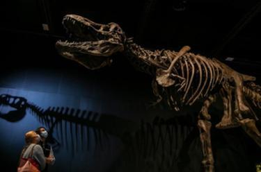 悉尼:博物館奇妙夜