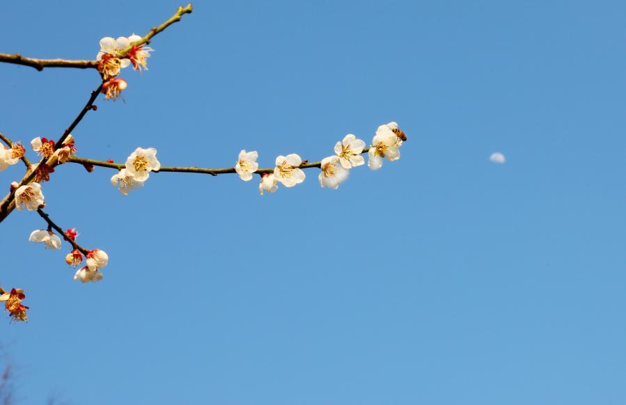 上海:花開春意濃