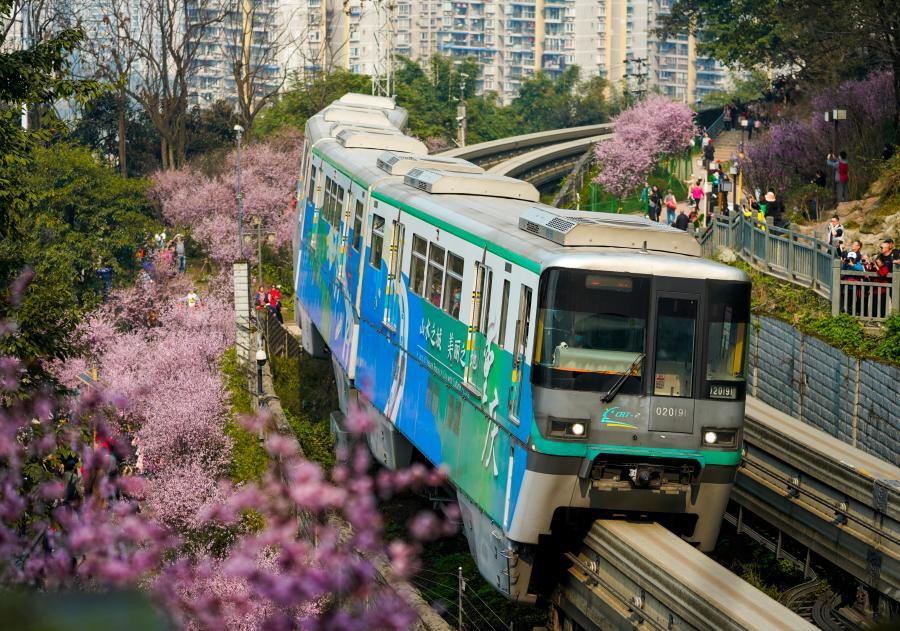 重慶:一路繁花相送 帶你駛向春天