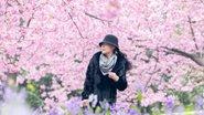 武漢東湖櫻花綻放