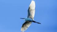 菲律賓的鳥