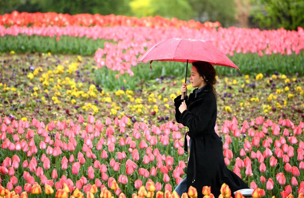 西安植物園第29屆春季花展開展