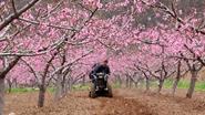 這才是最美的春色