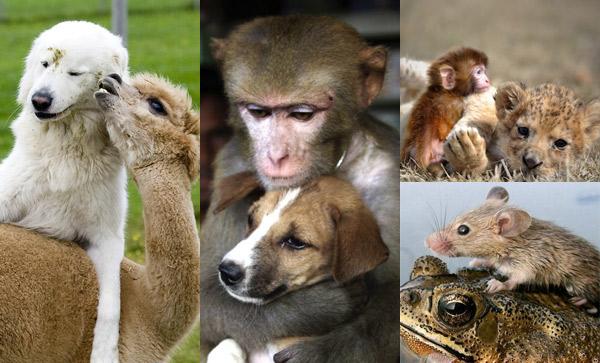 治愈系组图:可爱动物们的跨物种感情