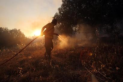 希腊首都附近森林起火 部分居民疏散图片