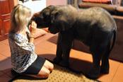 南非小象走失誤入居民家中被收養