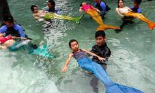 """菲律宾开设""""美人鱼""""游泳课图片"""
