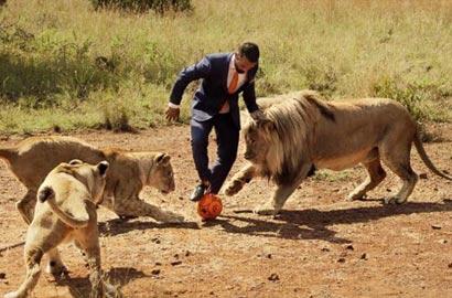 """""""狮语者""""与狮子踢足球呼吁保护动物"""