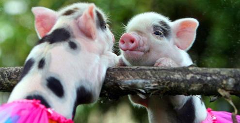 化人心的动物宝宝