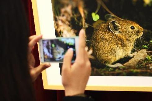 青海三江源保护区野生动物图片展在京举行
