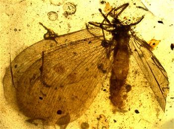 """研究發現1億多年前傳粉昆蟲精通偽裝術 自帶""""天線""""可遠程交流"""