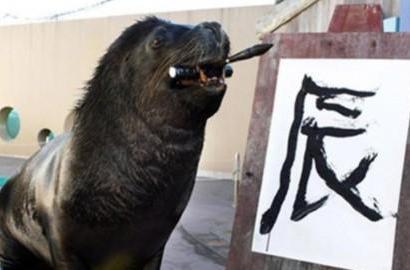"""盘点全球""""大师级""""动物:日本海狮擅长书法"""