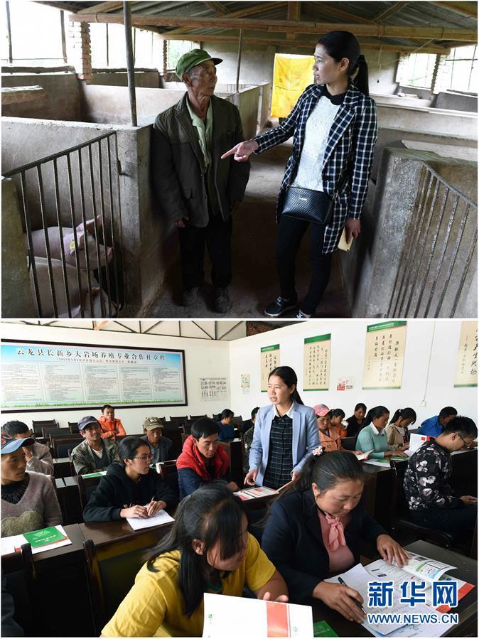 (砥礪奮進的五年)(1)滇西山區白族群眾發展養殖業脫貧致富影像