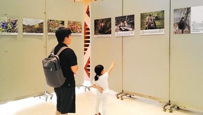 雪山白马滇金丝猴展举办拼音的雅之源情趣图片