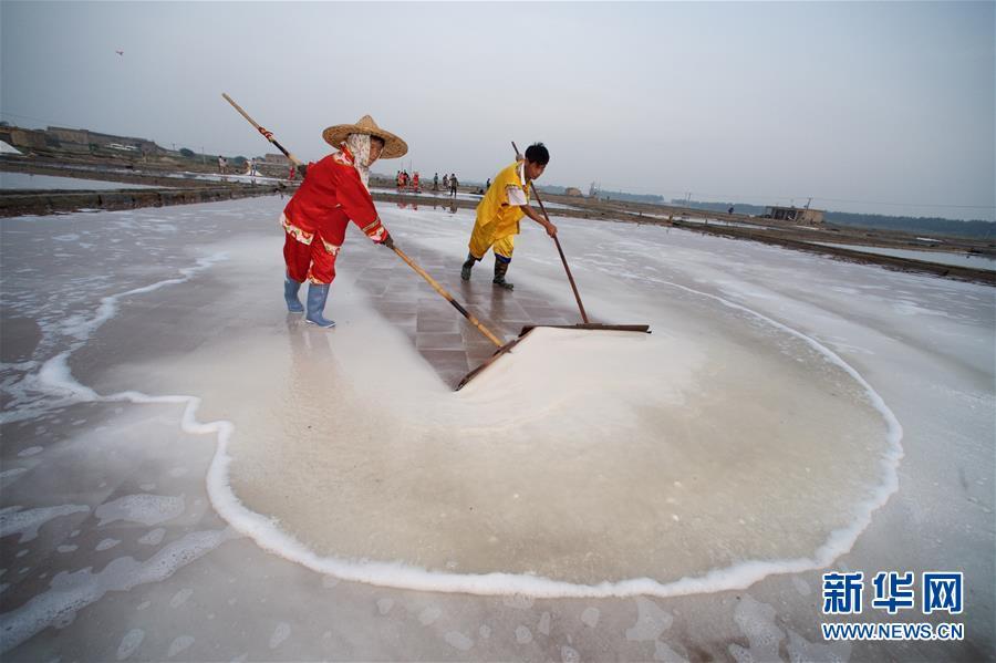 (社會)(1)福建泉州:百年鹽場的繁忙伏收季