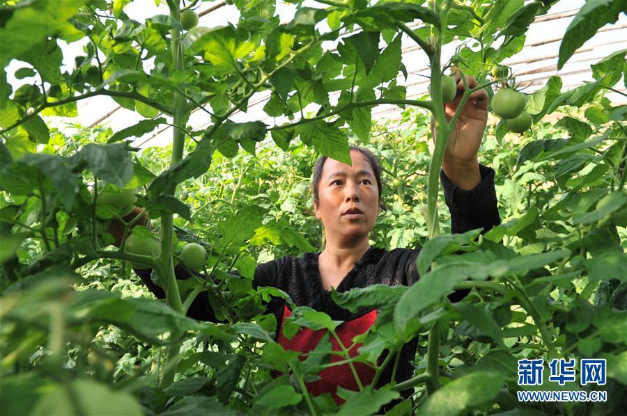 (脫貧攻堅)(1)河北南皮:精準扶貧結碩果