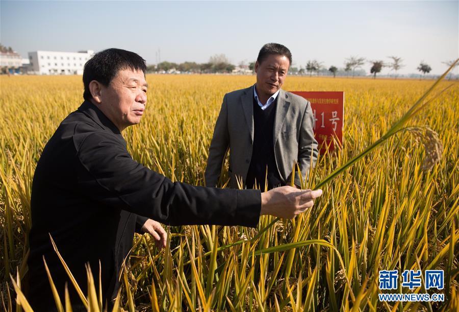 (新华全媒头条・图文互动)(7)奏响中国创新最强音――从国家科技大奖看创新走向