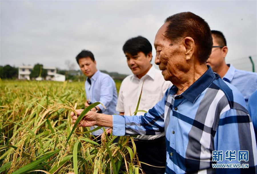 """(新华视点·图文互动)(2)国家科技奖3项授予""""水稻科学家"""",预示百姓饭碗将发生哪些革命?"""