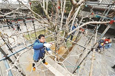 """颐和园为花木集中""""做手术"""" 提升春季观景效果"""