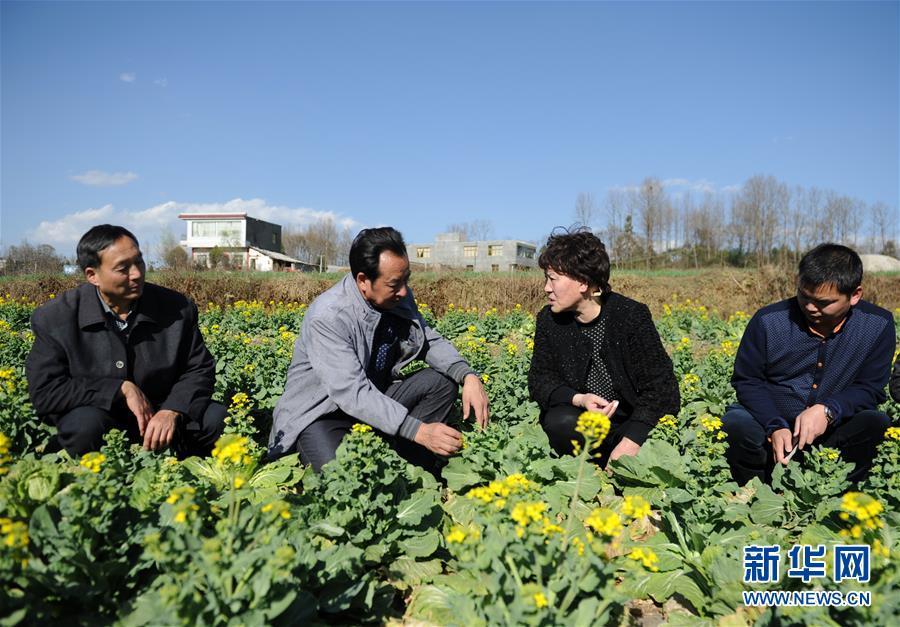 (新时代奋斗者·图文互动)(2)蔬菜专家下菜地——记贵州省农科院研究员李桂莲