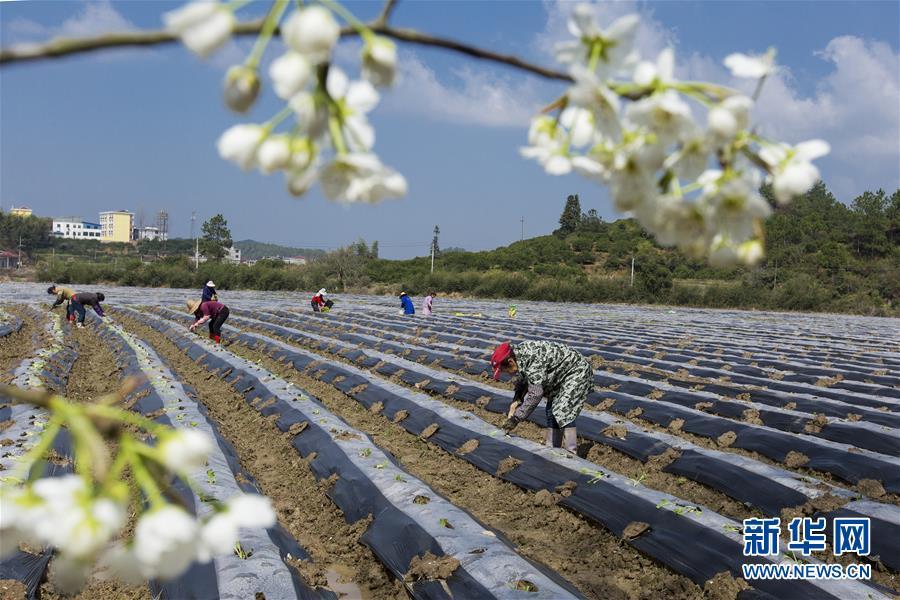 #(經濟)(4)春來農事忙
