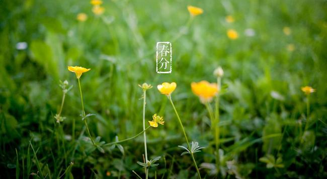 二十四节气丨今日春分,春风拂槛露华浓