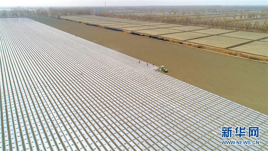 #(經濟)(1)新疆塔裏木:棉花播種忙