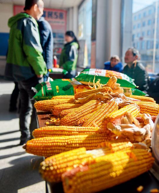 3月6日,全国产粮大县吉林省四平市梨树县,农民正在选购玉米种子 张楠摄/本刊