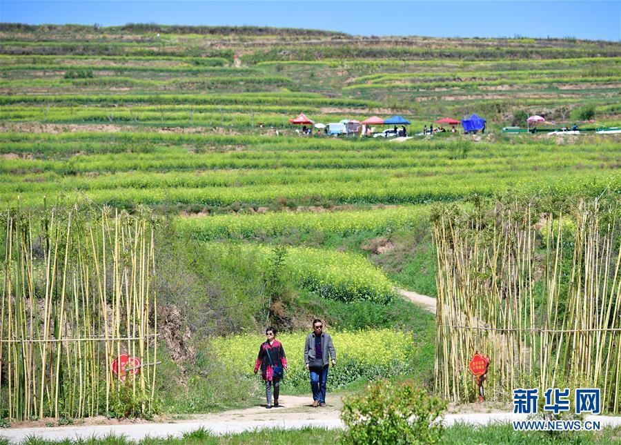 (環境)(1)油菜花黃田野綠