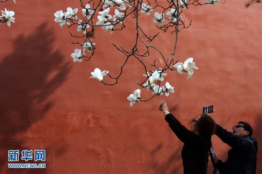 (在习近平新时代中国特色社会主义思想指引下――新时代新气象新作为・新华全媒头条・图文互动)(1)最浓是这中国红――北京市西城区弘扬红墙意识深化改革发展纪实