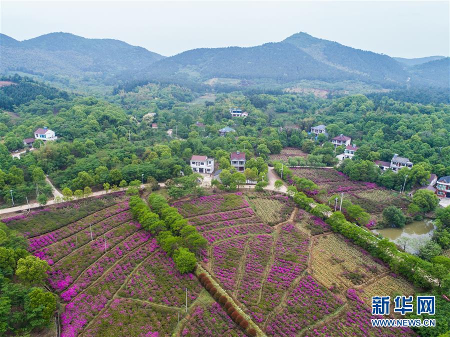 (新华全媒头条·图文互动)(1)新华社评论员:厚植生态文明 耕耘美丽中国