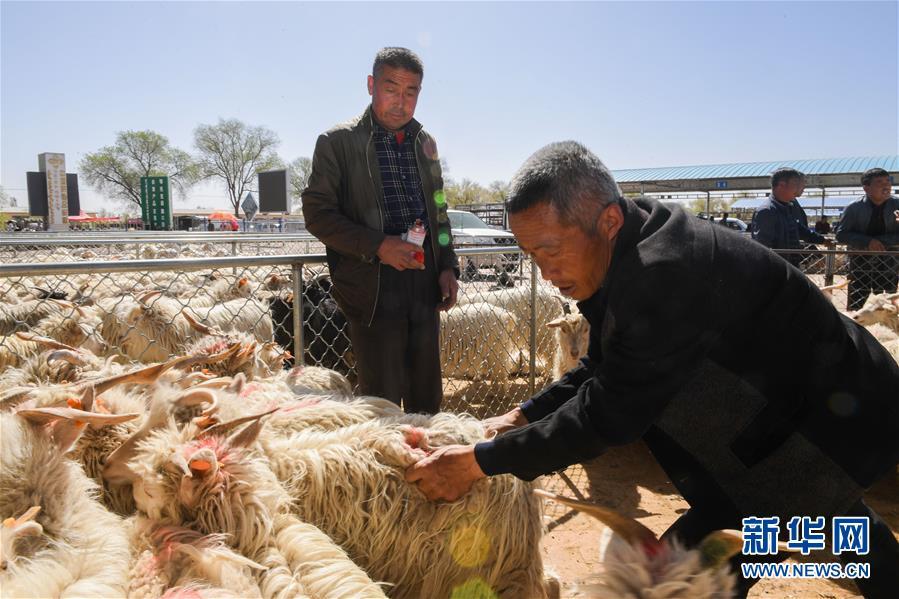 (經濟)(2)羊群交易市場忙