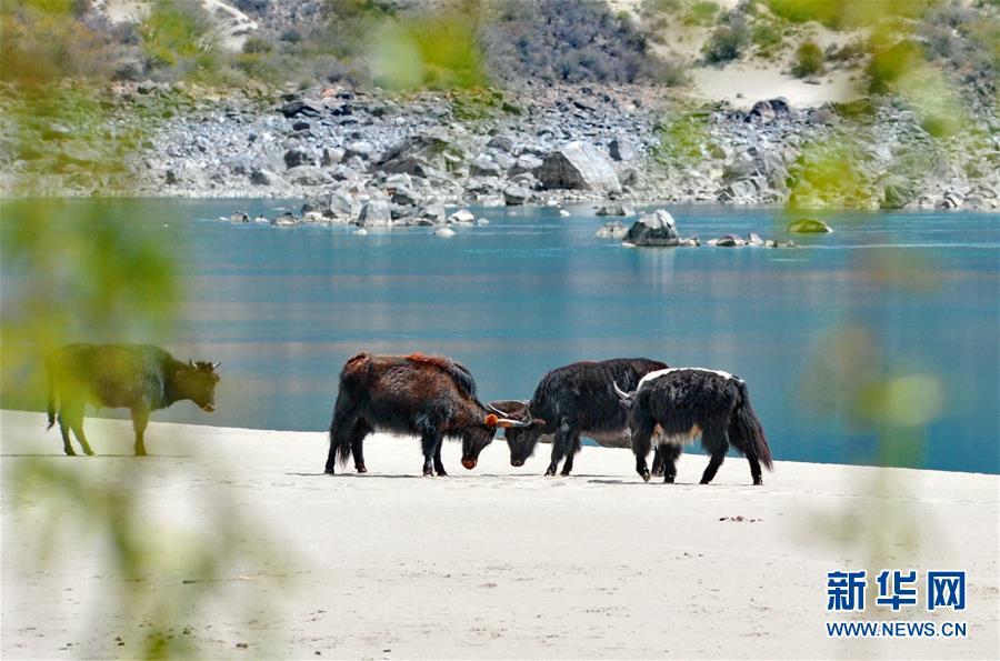 (美麗中國)(1)西藏雅尼國家濕地公園春色怡人